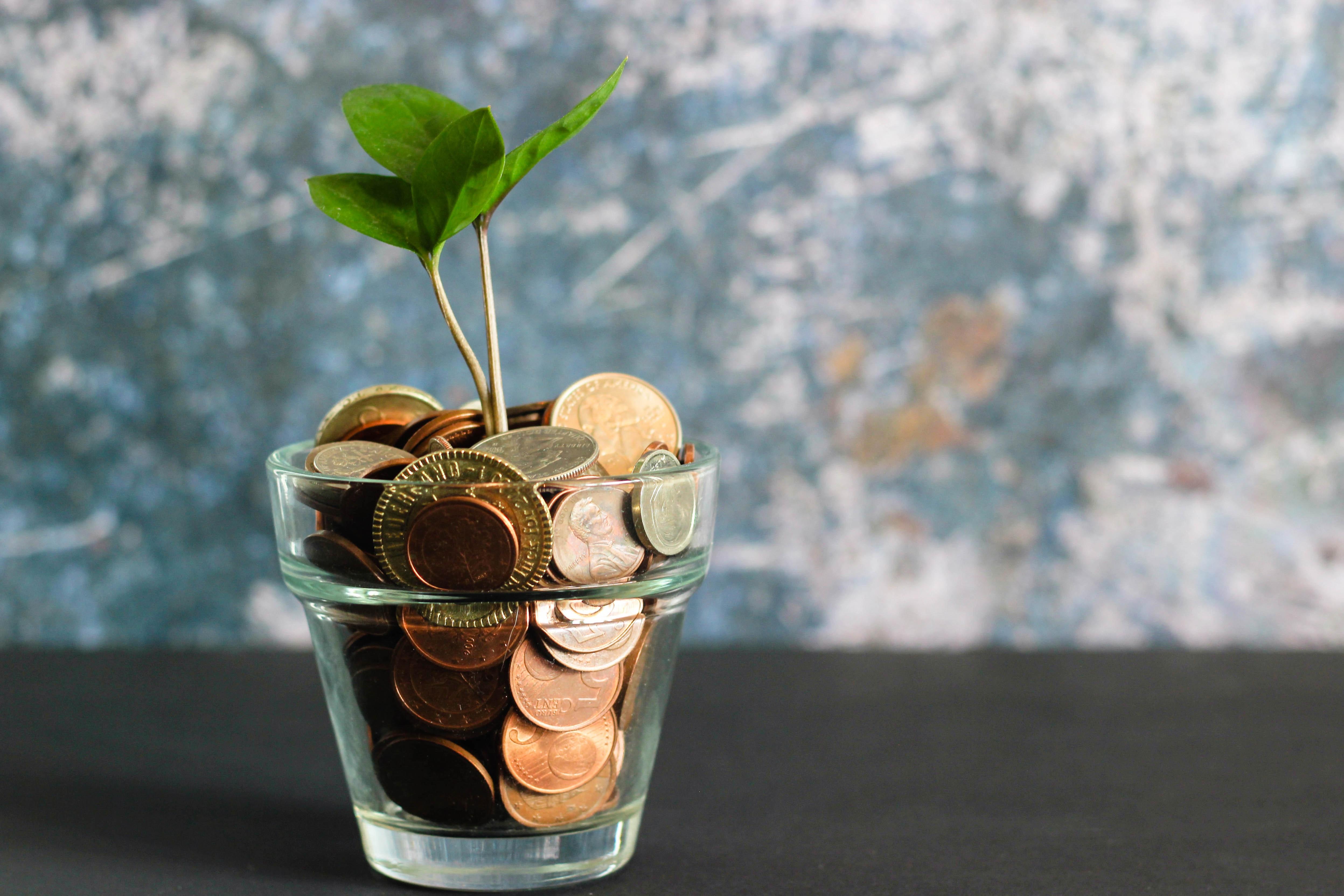 Plant in potje met geld - administratie